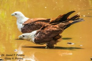 Birds of Prey And Bird Friendly Coffee Plantations